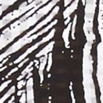 Petite Blouses: Night Glaring Kim Rogers Petite Printed Button Down Tank