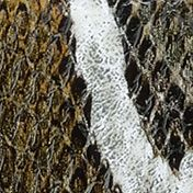Handbags & Accessories: Wallets & Wristlets Sale: Olive Multi Anne Klein Alligator Alley Continental Wallet
