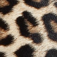 Hobo Bags: Leopard Del Mano Paula Shoulder Bag