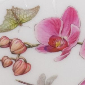 Portmeirion Dishes: Multi. Portmeirion Exotic Botanic Garden Red Ginger Oatmeal Bowl
