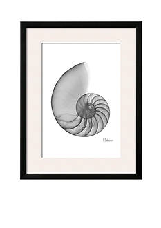 Art.com Nautilus Single by Albert Koetsier, Framed Art Print