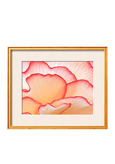 Art.com Petals of a Hydrangea by William Manning, Framed Photographic Print