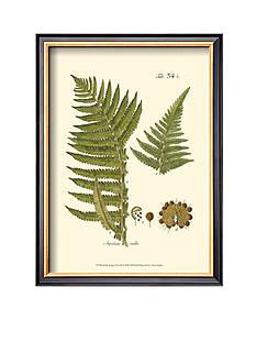 Art.com Small Antique Fern III Framed Art Print
