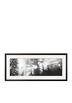 Art.com Road, Redwoods Park, California, USA Framed Photographic Print Online Only