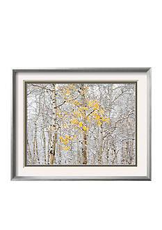 Art.com Fall Birch, Framed Photographic Print