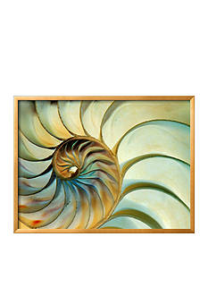 Art.com Close-up of Nautilus Shell Spirals by Ellen Kamp, Framed Photographic Print