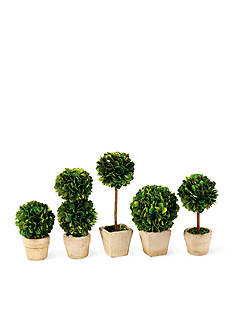 Napa Home & Garden™ 5-Piece Preserved Greens Mini Topiary Set