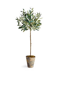 Napa Home & Garden™ 30-in. Potted Olive Tree