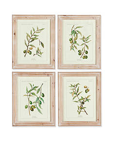 Napa Home & Garden™ 4-Piece Framed Botanical Print Set