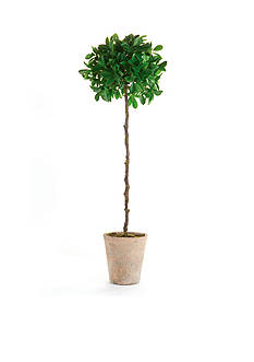 Napa Home & Garden™ 35-in. H Potted Ficus Topiary