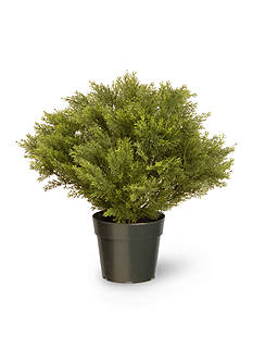 National Tree Company Globe Juniper with Green Pot