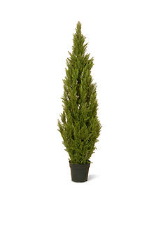 National Tree Company Arborvitae with Green Pot
