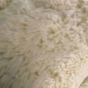Kassatex Bed & Bath Sale: Ivory Kassatex KASSA RUG 24 40