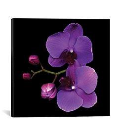 iCanvas The Color Purple by Magda Indigo Canvas Print