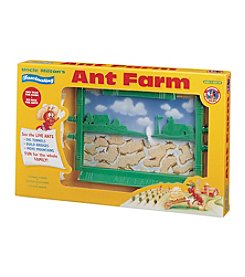 The Original Ant Farm: Live Ant Habitat