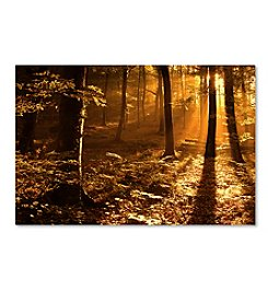 Trademark Fine Art Philippe Sainte Laudy 'Morning Light' Canvas Art