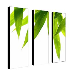 Trademark Fine Art Philippe Sainte-Laudy 'Life is Green' Canvas Art
