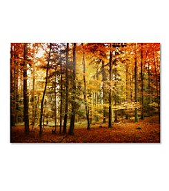 Trademark Fine Art Philippe Sainte-Laudy 'Brilliant Fall Color' Canvas Art