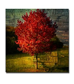 Trademark Fine Art Philippe Sainte-Laudy 'Autumn Red' Canvas Art