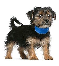 Petmaker Cooling Pet Collar