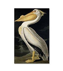 Trademark Global Fine Art John James Audubon 'American White Pelican' Canvas Art