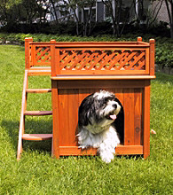 Merry Pet House Room with a View Dog House