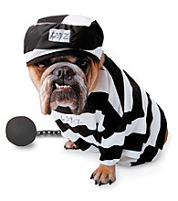 Zelda Wisdom - Prisoner Dog Costume