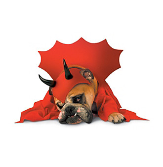 Zelda Devil Dog Costume