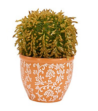 Nearly Natural® Barrel Cactus Silk Plant