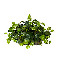Nearly Natural® Pothos Ledge Plant (Set on Foam) Silk Plant