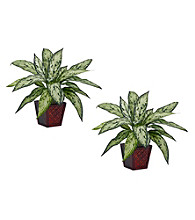 Nearly Natural® Silver Queen Silk Plant (Set of 2)