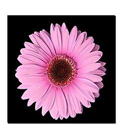"""Trademark Fine Art """"Pink Gerber Daisy"""" Canvas Art"""