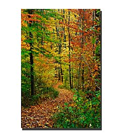"Trademark Fine Art ""Fall Trail"" by Kurt Shaffer  Canvas Art"