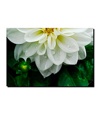 White Dahlia by Kurt Shaffer Gallery-Wrapped Canvas Art