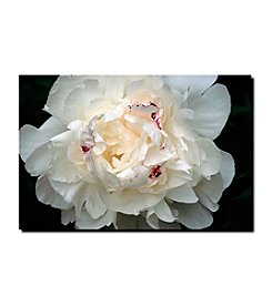 """Perfect Peony"" by Kurt Shaffer Gallery-Wrapped Canvas Art"