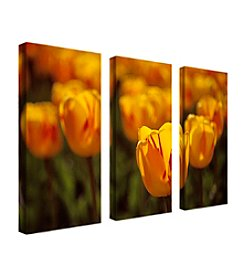 "Trademark Fine Art ""Tulips on Fire"" by Kurt Shaffer Canvas Art"