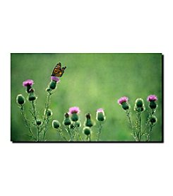"""Trademark Fine Art """"Monarch Thistles""""  by Kurt Shaffer Canvas Art"""