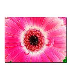 Trademark Fine Art Pink Gerber by Kurt Shaffer Canvas Art Giclee