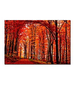 "Trademark Fine Art ""The Red Way"" Philippe Sainte-Laudy Canvas Art"