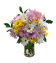 Sweets in Bloom® Assorted Daisy Bouquet