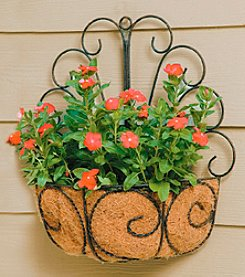 Metal Peacock Wall Basket with Coco Liner