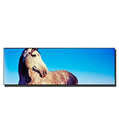 Trademark Fine Art Kentucky White Horse Framed Art by Preston