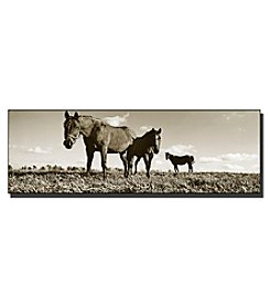Trademark Fine Art The Horses Framed Art by Preston