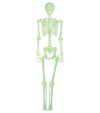 Lifesize Glow in the Dark Pose N Stay Skeleton