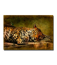 "Trademark Fine Art ""Wake Up; Sleepyhead"" by Lois Bryan"