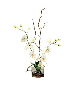 Vickerman Phalaenopsis Orchid and Curly Willow in Glass Cylinder Vase and Acrylic Water.