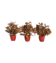 Vickerman Set of 3 French Ivy in Burgundy Earth Friendly Pot
