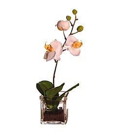 Vickerman Mini Phalaenopsis Orchid in 3