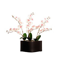 Vickerman White Orchids in Black Container