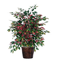Vickerman 4' Capensia Bush